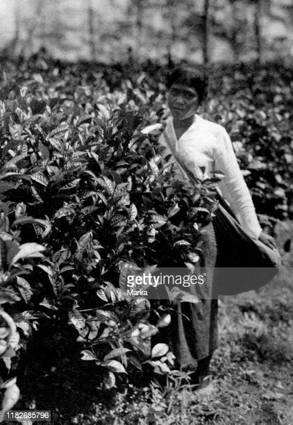 Woman in a plantation, Indonesia 1920-30.
