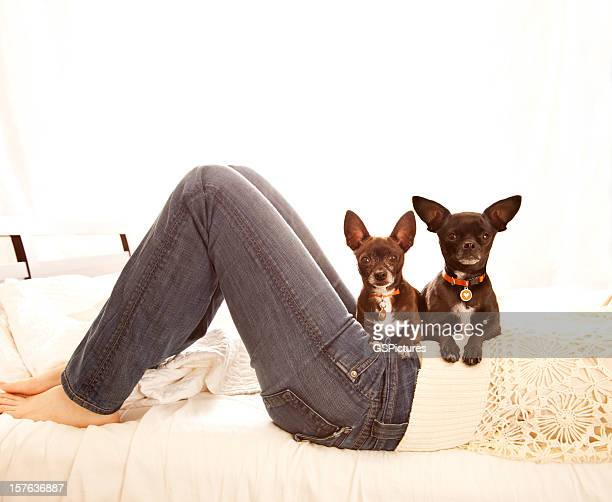 Woman in bed with two Chihuahua dogs on her lap