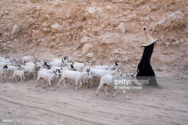 Woman in black abaya and straw hat with goats
