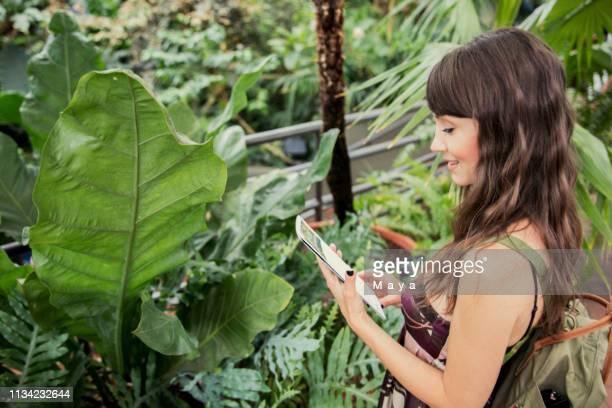 frau in botanischer garde - botanischer garten stock-fotos und bilder