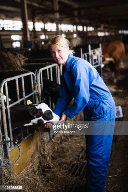 woman in cowshed - female animal stock pictures, royalty-free photos & images