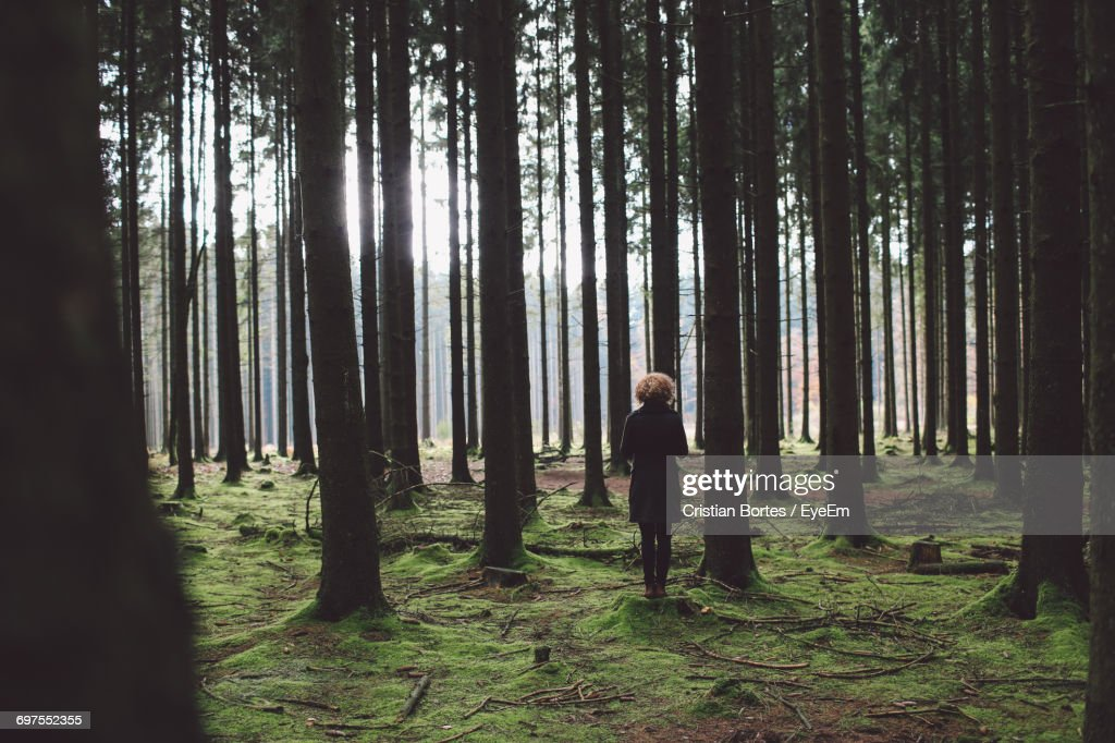 Woman In Forest : Stock Photo