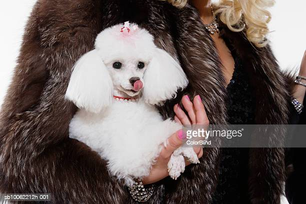 Woman in fur coat holding poodle, close-up of dog