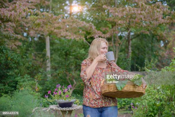 woman in garden drinking from cup - green fingers stock pictures, royalty-free photos & images