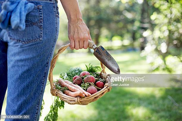 woman in garden, holding basket of vegetables and spade, rear view, mid section - mid section stock photos and pictures