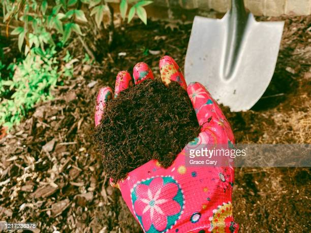 woman in garden holds handful of soil - mulch stock pictures, royalty-free photos & images