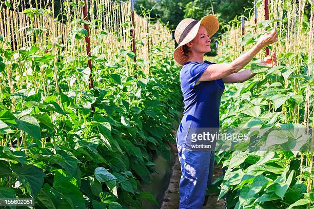 Woman in garden or farm with bean plants