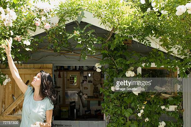 woman in garden - shed stock pictures, royalty-free photos & images
