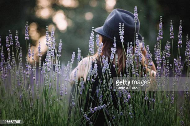 woman in hat enjoying lavender field - gabriela stock pictures, royalty-free photos & images