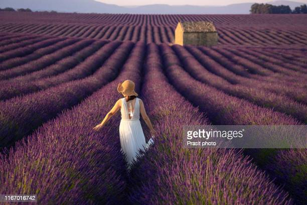 woman in lavender flowers field at sunset in white dress walking in lavender field with balloon in sky in background in valensole , provence, france. - purple dress stock pictures, royalty-free photos & images