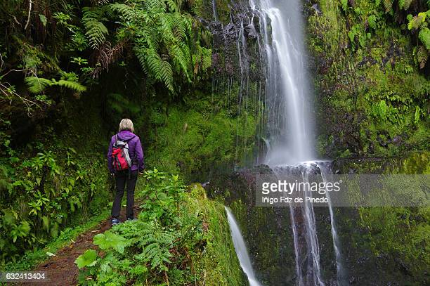 woman in levada do caldeirão verde- madeira island- portugal - madeira island stock photos and pictures
