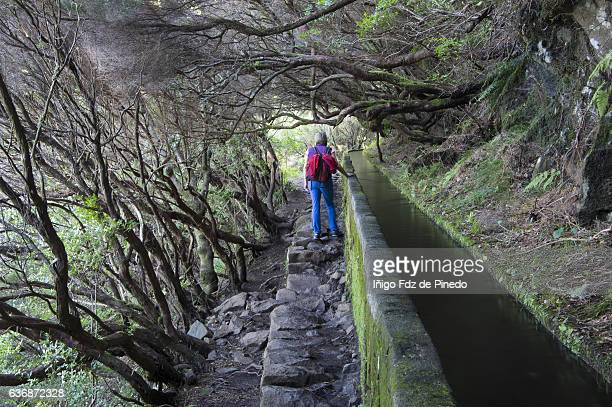 woman in levada pathway- laurel forest- madeira island- portugal - madeira island stock photos and pictures