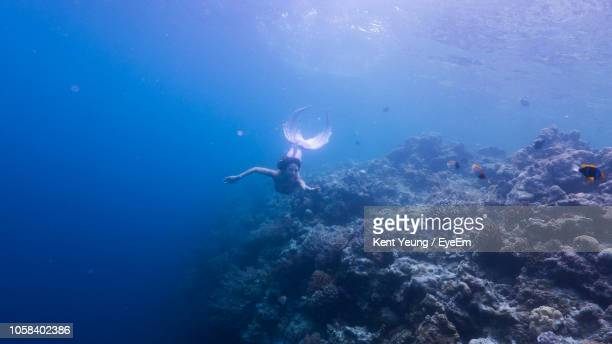 woman in mermaid costume swimming in sea - mermaid stock photos and pictures