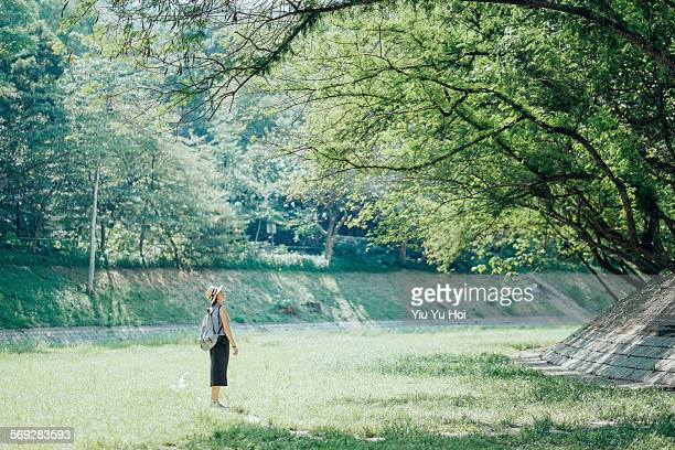 woman in nature watching beams of light in forest - yiu yu hoi stock pictures, royalty-free photos & images