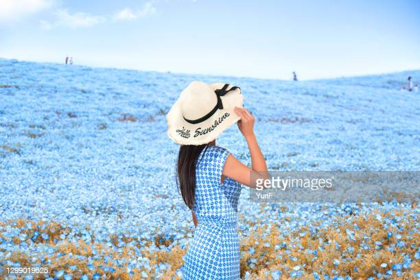 woman in nemophila - 茨城県 ストックフォトと画像