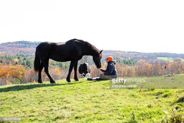 woman in open rural field offering her flat palm to her horse with dairy cow in background. - catherine ledner stock pictures, royalty-free photos & images