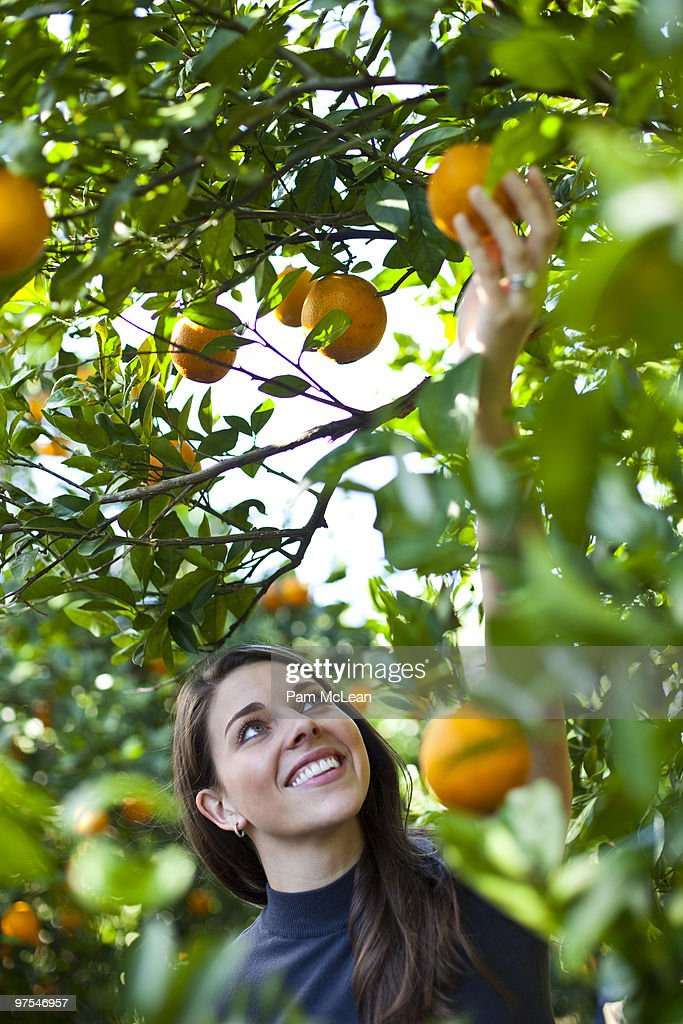 Woman in orange orchard : Stock Photo