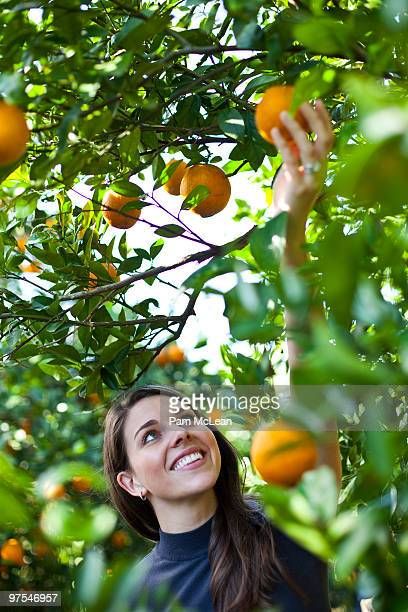 woman in orange orchard - orange orchard stock photos and pictures