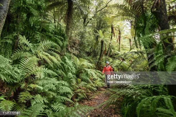woman in red jacket walking through a beautiful lush fern forest - marlborough new zealand stock pictures, royalty-free photos & images