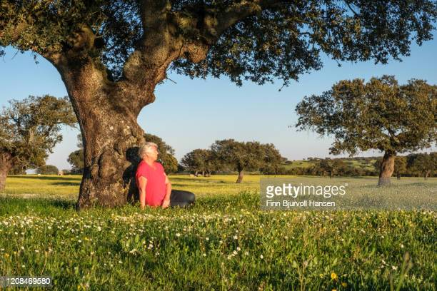 woman in red shirt sitting with her back against a olive tree in a green field. white flowers - finn bjurvoll stock pictures, royalty-free photos & images