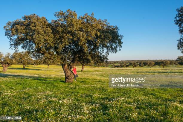 woman in red shirt standing with her back against a olive tree in a green field. white flowers - finn bjurvoll ストックフォトと画像