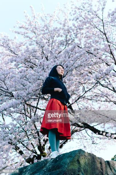 woman in red skirt looking up under cherry blossom trees - under skirt stock photos and pictures