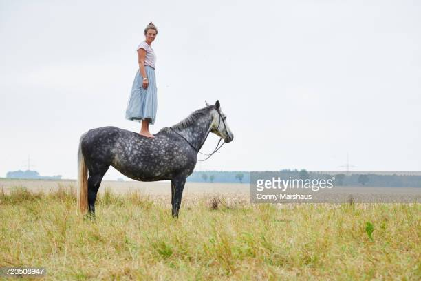 woman in skirt standing on top of dapple grey horse in field - konzepte und themen stock-fotos und bilder