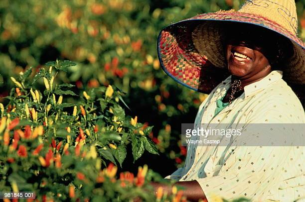 Woman in straw hat picking chilli peppers, Louisiana, USA