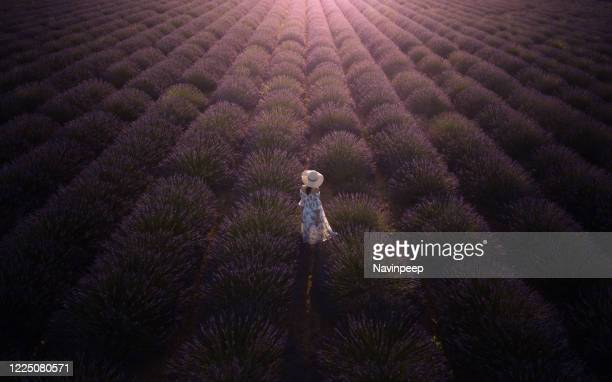 woman in sundress and hat in lavender field, provence, france - アルプドオートプロバンス県 ストックフォトと画像