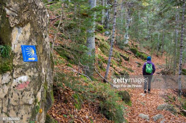 woman in the forest -  odesa national park- torla- huesca - aragon - spain - camino de santiago stock pictures, royalty-free photos & images