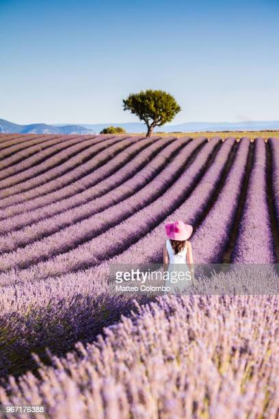 woman in the lavender, provence, france - provence alpes cote d'azur stock photos and pictures
