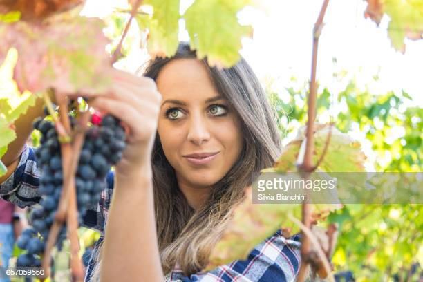 Woman in Vineyard harvesting grape