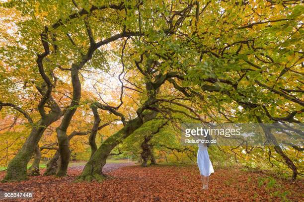 Woman in white dress standing under twisted beech trees in autumn colors