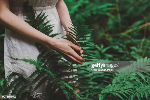 woman in white dress walking in the forest - fern stock pictures, royalty-free photos & images