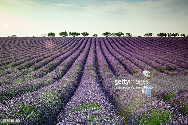 Woman in white in a lavender field.