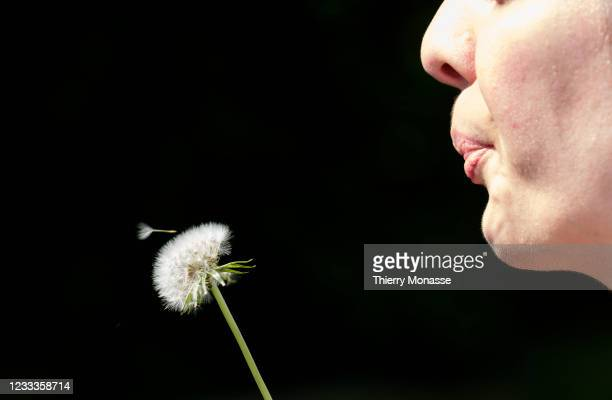 Woman is blowing a dandelion flower on June 9, 2021 in Redu, Belgium. Superstitious people think it brings good luck to blow dandelion seeds.
