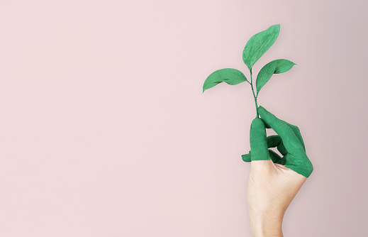 Woman is holding green leaf branch with painted hand, pink soft background 1064069544