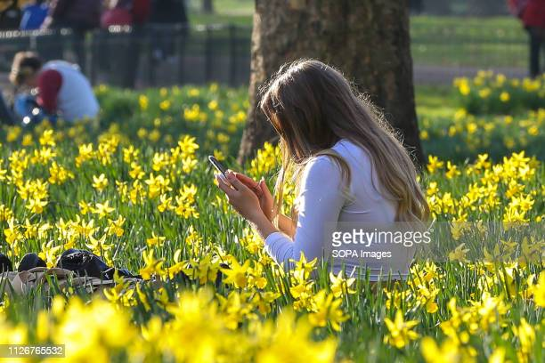 Woman is seen seated on the ground at St James's Park on a warm and sunny day as daffodils starts to blossom. The Met Office is predicting...