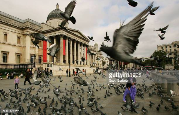 A woman is surrounded by pigeons as she feeds them despite the threat of a bird flu pandemic in Trafalgar Square on October 26 2005 in London England...