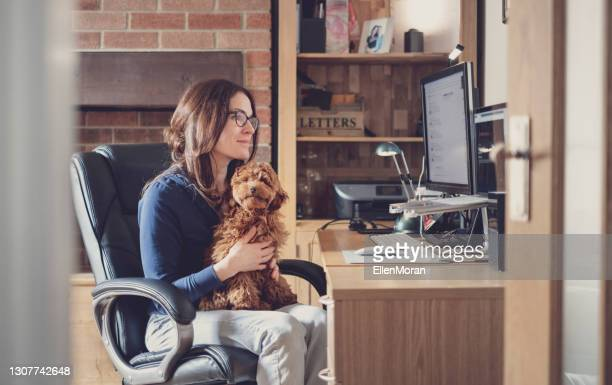 a woman is working from home with her puppy - politics and government stock pictures, royalty-free photos & images