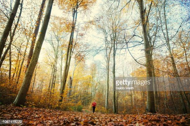 Woman jogging in forest.