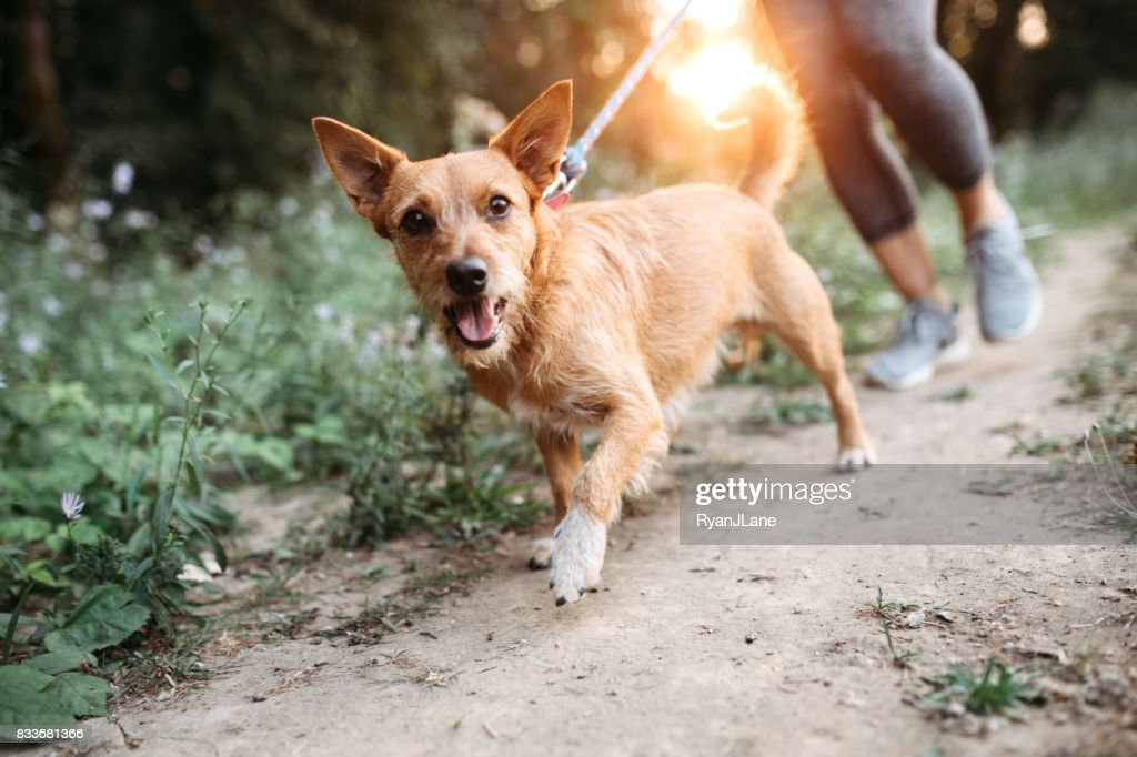 Woman Jogging With Dogs : Stock Photo