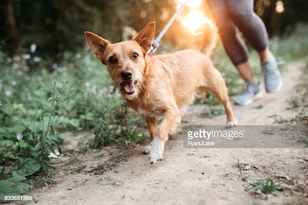 woman jogging with dogs - dog stock pictures, royalty-free photos & images