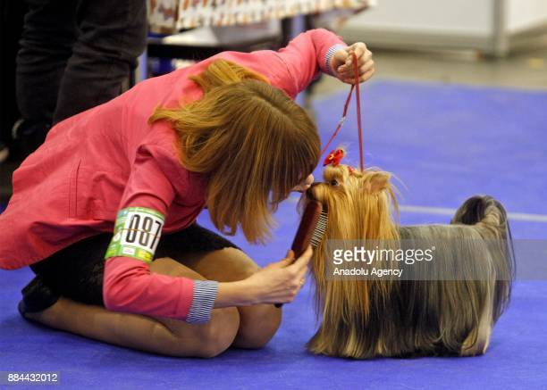 A woman kisses her dog during the International Dog Shows of all breeds 'Kievan Rus 2017' and 'The Crystal Cup of Ukraine 2017' in Kiev Ukraine on...