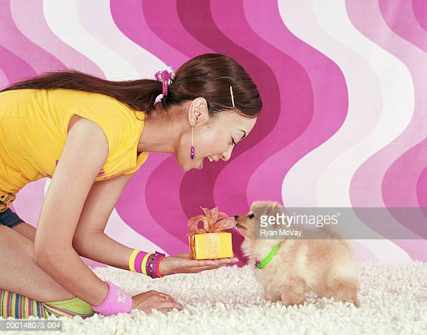 woman kneeling on carpet, holding present to pomeranian puppy - japanese spitz stock pictures, royalty-free photos & images