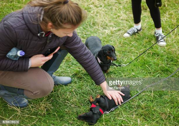 Woman kneels to stroke a puppy during the Osmotherley Country Show on August 5, 2017 in Osmotherley, England. The annual show hosts pony, cattle and...
