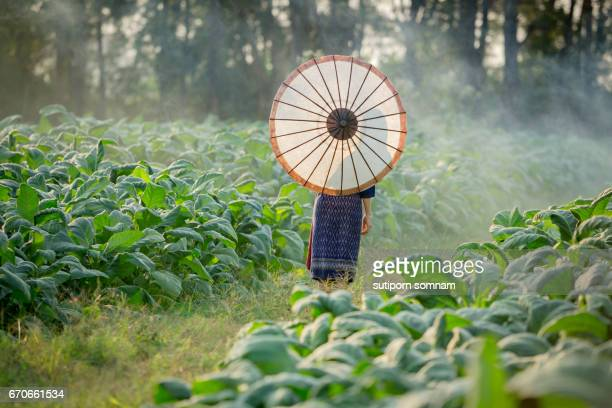 Woman Laos backside holding umbrella
