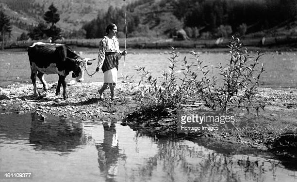 Woman leading an ox Bistrita Valley Moldavia northeast Romania c1920c1945 Depicting customs and traditional labour in the rural Carpathian Mountains...