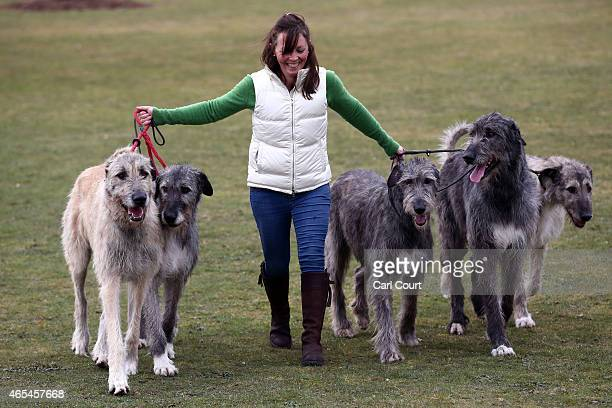 A woman leads her Irish Wolf Hounds into the third day of Crufts dog show at the National Exhibition Centre on March 7 2015 in Birmingham England...