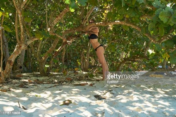 a woman leaning against a tree, standing in the sand in st. thomas usvi - paisajes de st thomas fotografías e imágenes de stock